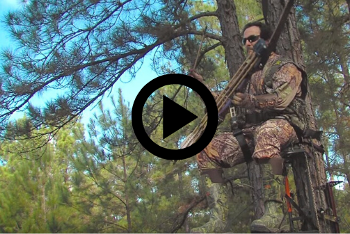 hunter in tree stand, video link