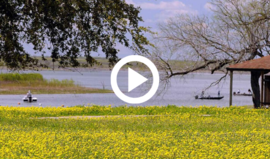 Yellow wildflowers in front of lake with fishing Choke Canyon
