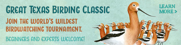 Great Texas Birding Classic - sign up and join us!
