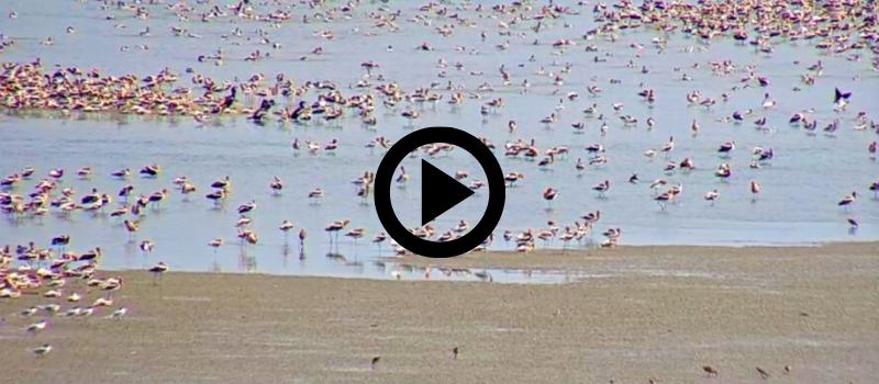 Bolivar Flats, with video link