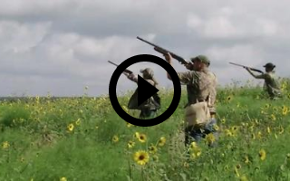 3 people shooting at dove in a field, video link