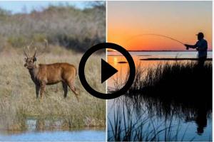 Exotic deer and man fishing, video link