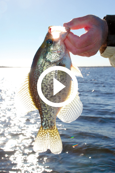 crappie backlit, video link