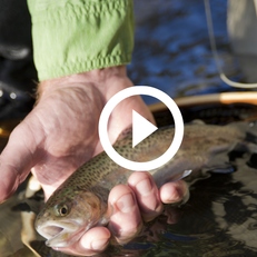 hand holding trout, video link