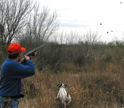 quail hunter with dog