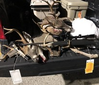 deer heads on truck tailgate