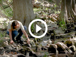 Meredith Longoria examines wildlife by a river, video link