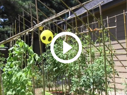 garden with bird deterrents, video link