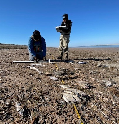 Fish kill due to cold at Lower Laguna Madre