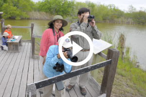 Family birdwatching at Estero Llano Grande SP, video link to tips for birdwatching