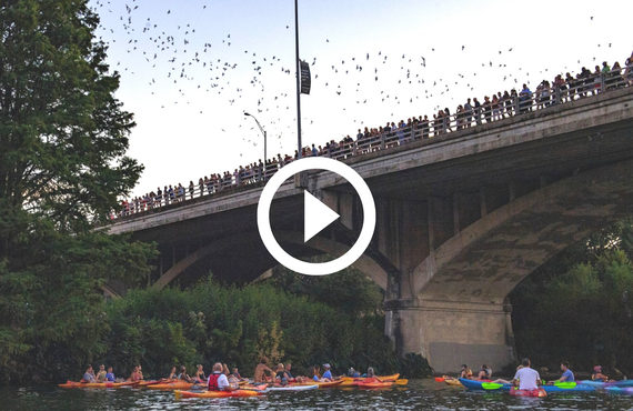 Bats emerge from Congress Ave. bridge to audience, video link