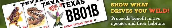 Wildlife license plate proceeds benefit native species and their habitats, link