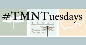 #TMN Tuesdays