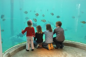 Family admiring fish exhibit
