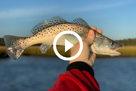 seatrout being held, video link