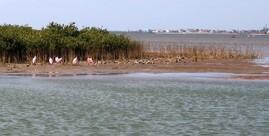 Coastal Rookery birds