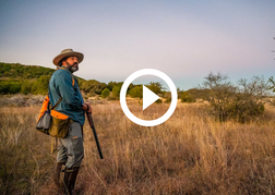 dove hunter at sunrise, video link