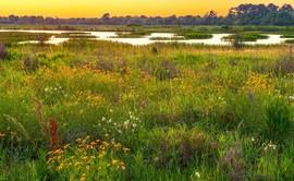 Sheldon Lake prairie with flowers, wetlands