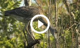 Bird at Sheldon Lake, video link