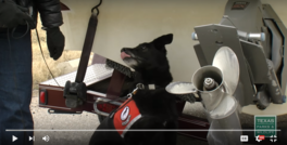 Working Dogs for Conservation Sniff Out Zebra Mussels