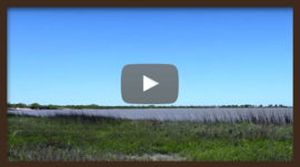 Video on the Gulf Coast Restoration