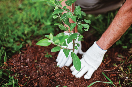 Plant a Tree for Arbor Day