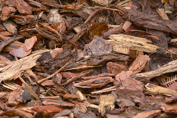 Mulch Conserves Water