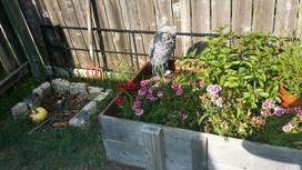 Vernon's Garden and Compost pile