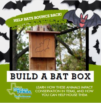 How to Build a Bat Box