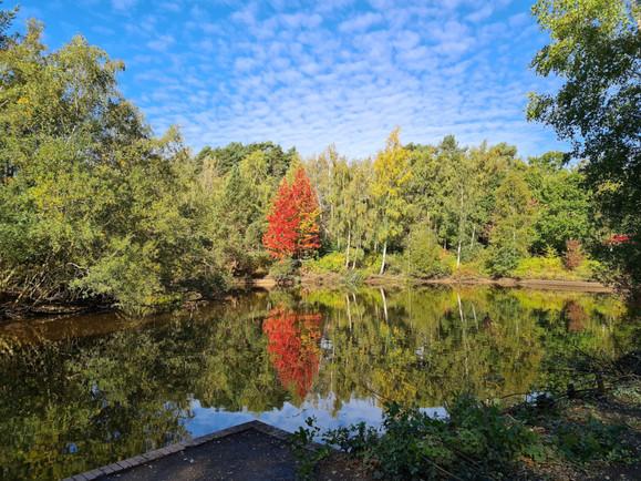 Savernake Park pond