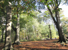 Bill Hill in autumn