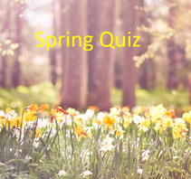 daffodils with title spring quiz