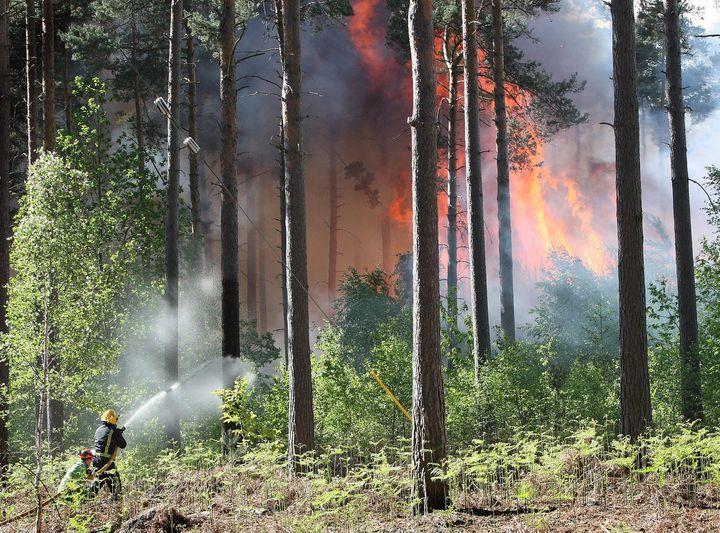 Swinley Forest Fire 2011