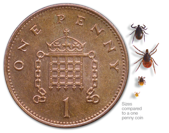 Tick sizes in comparison to a one pence coin