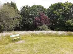 New wildflower patch at Evenlode Way