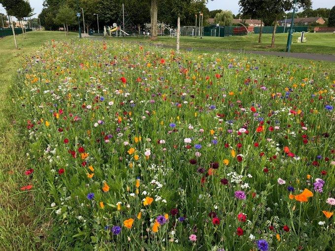 Inham Nook Wildflowers