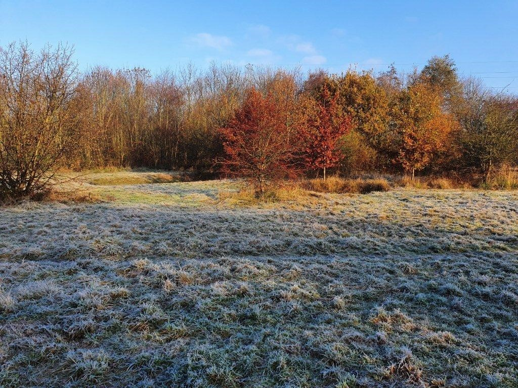 Frost on the ground at Banks Road Open Space with red and orange trees in the background