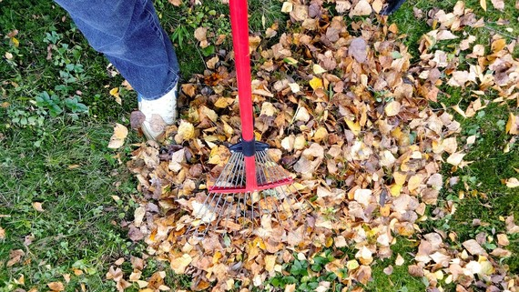 Person in trainers raking leaves from a lawn