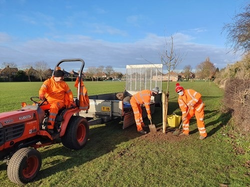 Gardeners planting new trees