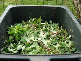 leaves full in garden waste bin
