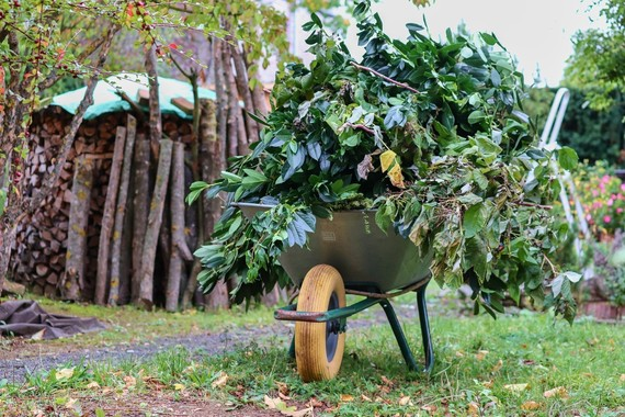 Wheelbarrow full of leaves from a garden