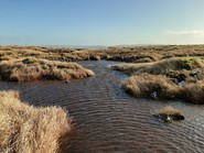 Restored Peatland