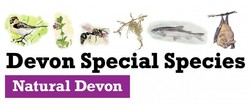 Special Species Devon logo