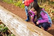 girl looking at a log