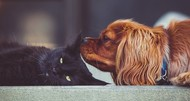 cat and dog lying down