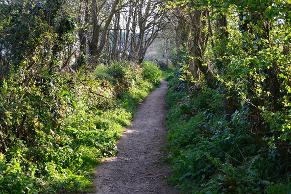 A Devon footpath with trees on both sides