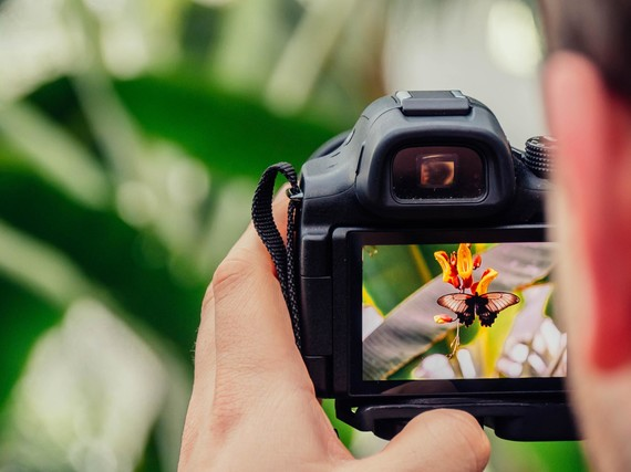 photographer taking picture of butterfly