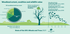 Pie chart depicting UK woodland and tree cover
