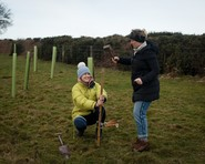 An image of young trees being planted
