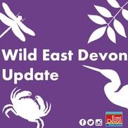 Wild East Devon